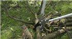 Coupe branches à enclume 65 cm